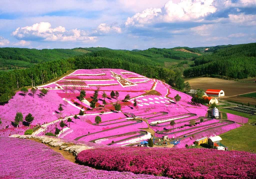 japan-shibazakura-takinoue-park