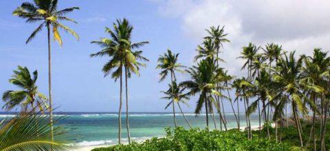 Bahari Dhow Beach Villas1