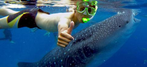 oslob-cebu-whale-shark-philippines