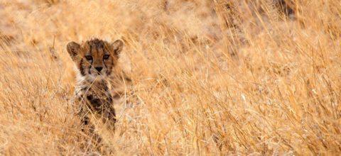 safari-kenya